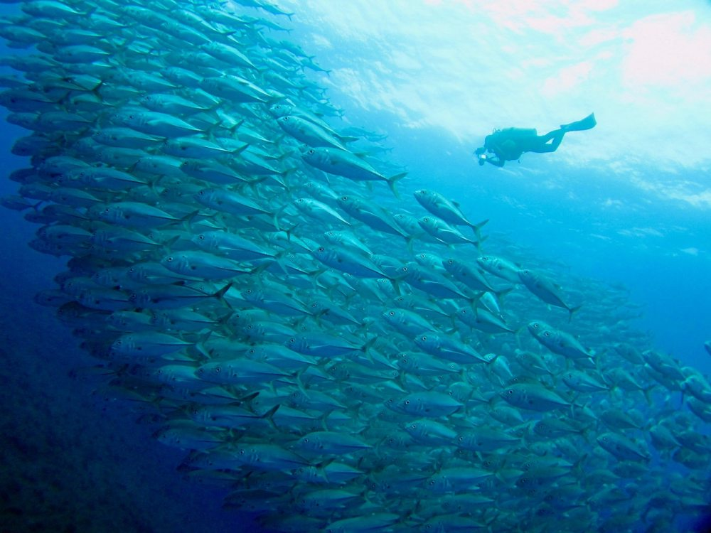 Divemaster and school of fish.