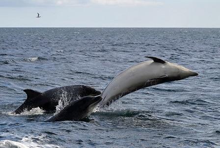bottlenose dolphins ocean positive news