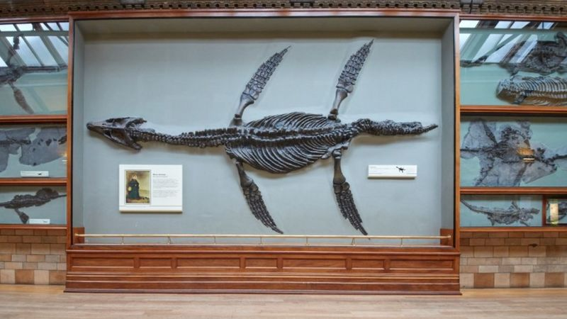 Mary Anning - natural History Museum