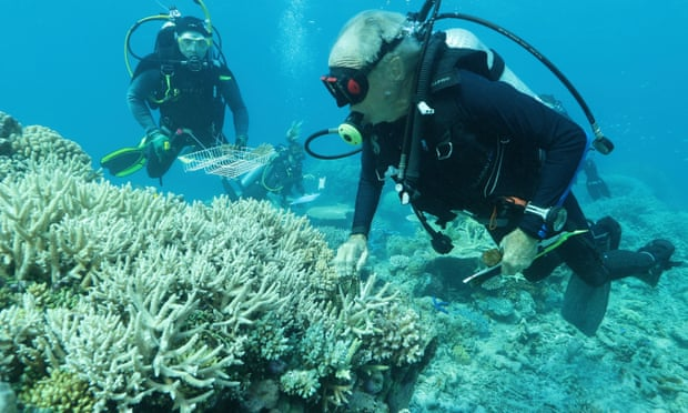Coral & divers - Great Barrier Reef Legacy