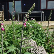 the chalet garden early June