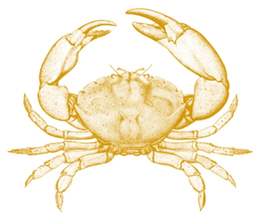 Crab Recipes Seafood Connection