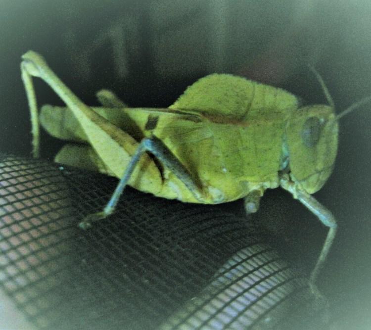 spooky cicada edited