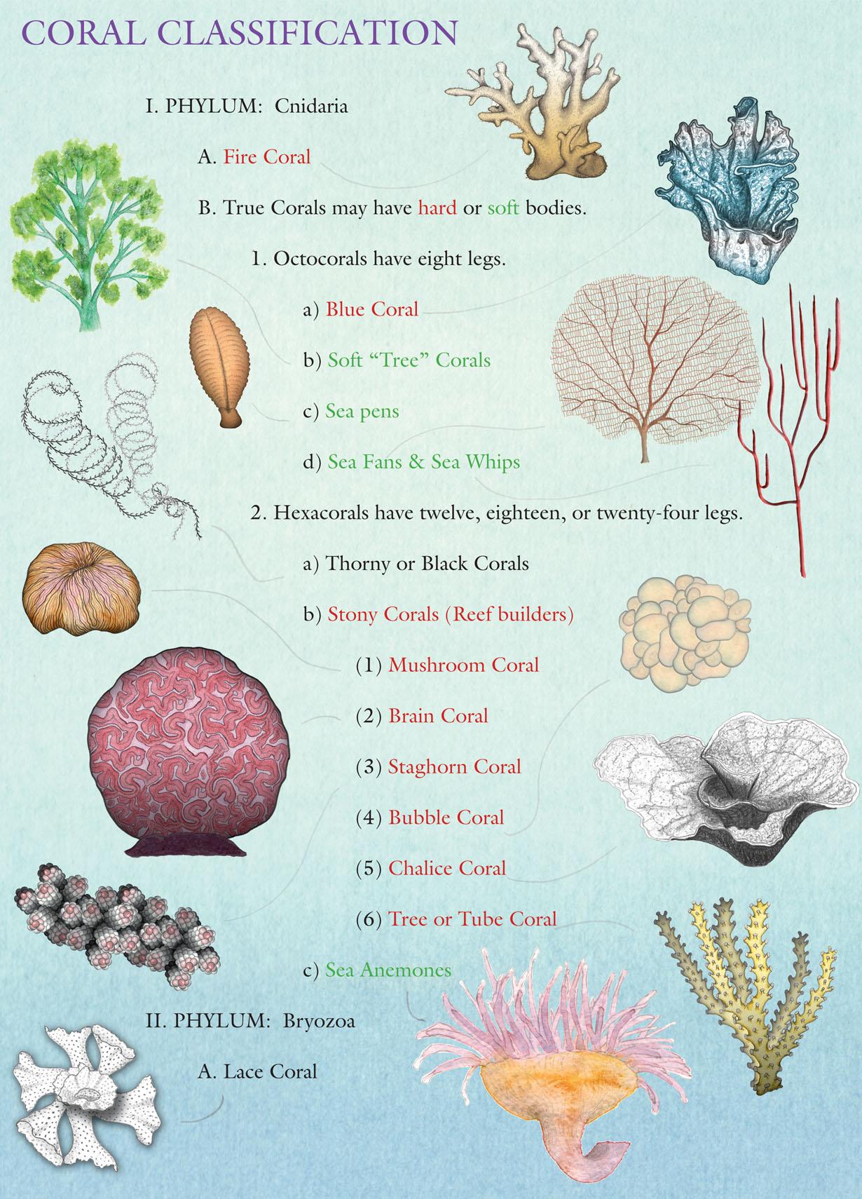 Coral Names