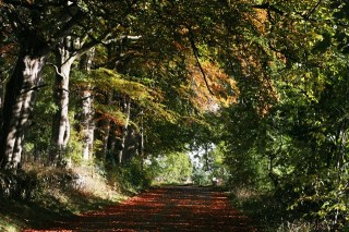 Autumn colours in Teesdale, County Durham
