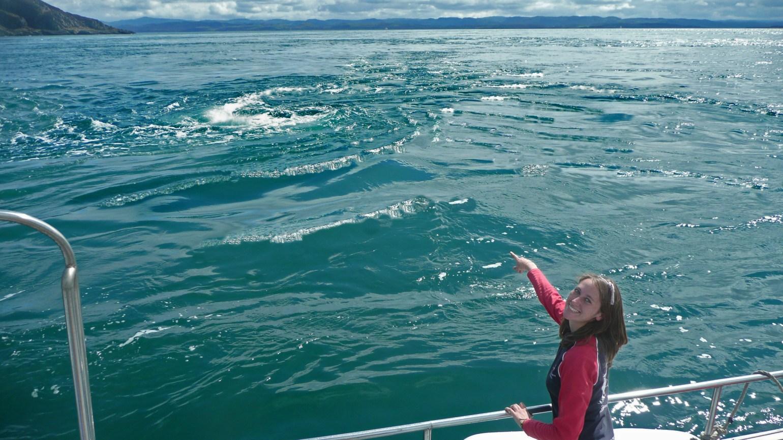 sealife adventures corryvreckan whirlpool