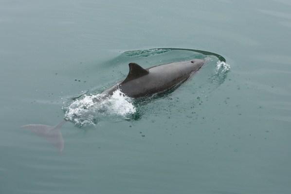 bottlenose dolphin spotting in Scotland