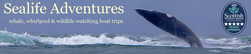 Sealife Adventures Banner with Visit Scotland 5 star rating