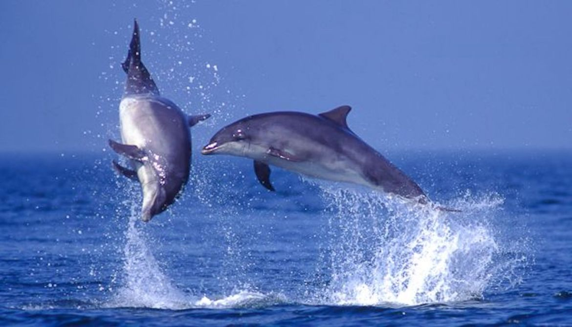 Sealife Adventures two dolphins jumping