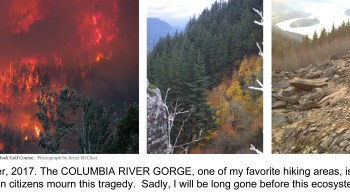 Columbia River Gorge hikes, Eagle Creek fire 2017, forest fire