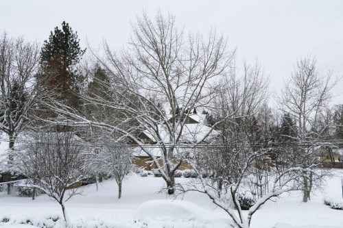 this moment snow blankets where I live