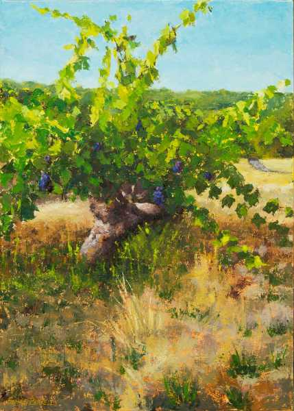 Sonoma-Vineyard-Painting-Seamus-Berkeley