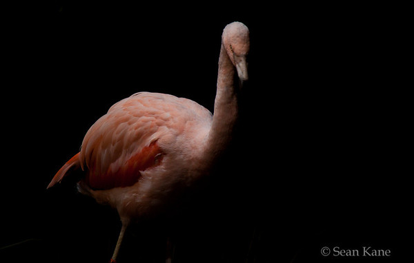 Dramatic Flamingo
