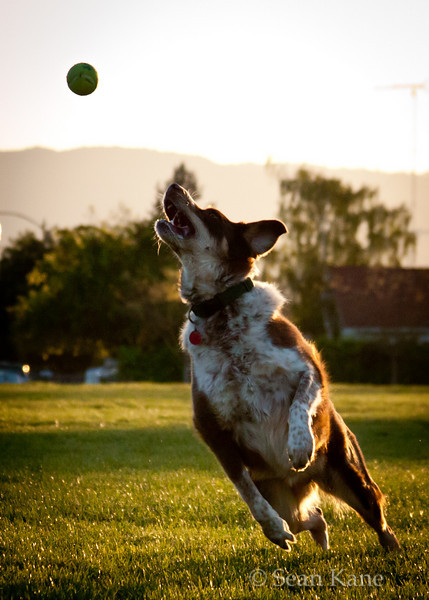 Zoe Leaps for Tennis Ball
