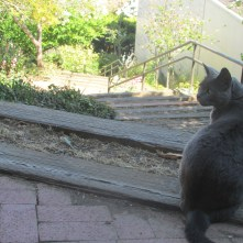 Buzz the Cat guards the approach to the Saturn Steps