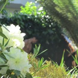 Garden detail on Vulcan Street