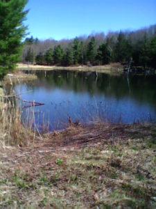 beaver_pond
