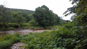 brook_flowing_east