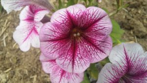 love_blooms