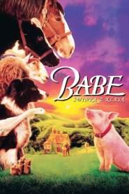 Babe – świnka z klasą online cda pl