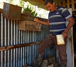 Olivio collecting eggs