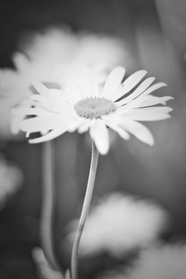 TrickleCreek_Flora-72