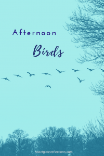 afternoon birds