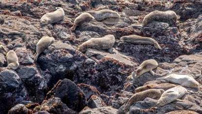 Sea Ranch packing list, seals, marine sanctuary