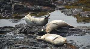 teen friendly vacation, Sea Ranch harbor seals,banana behavior