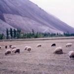 ジープに乗って12時間。シャンドゥール峠のパンダール湖へと向かう【パキスタン】