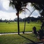 ウブドの村と近郊の見どころ「テガララン」と「グヌン・カウィ・スバトゥ寺院」【バリ島】