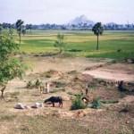 2500年前、この地で仏教が生まれた!ブッダが悟りを得た地「ブッダガヤ」【インド】