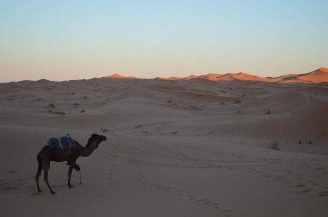 メルズーガ砂漠【モロッコの旅】