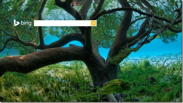 Bing homepage UnderwaterMangrove