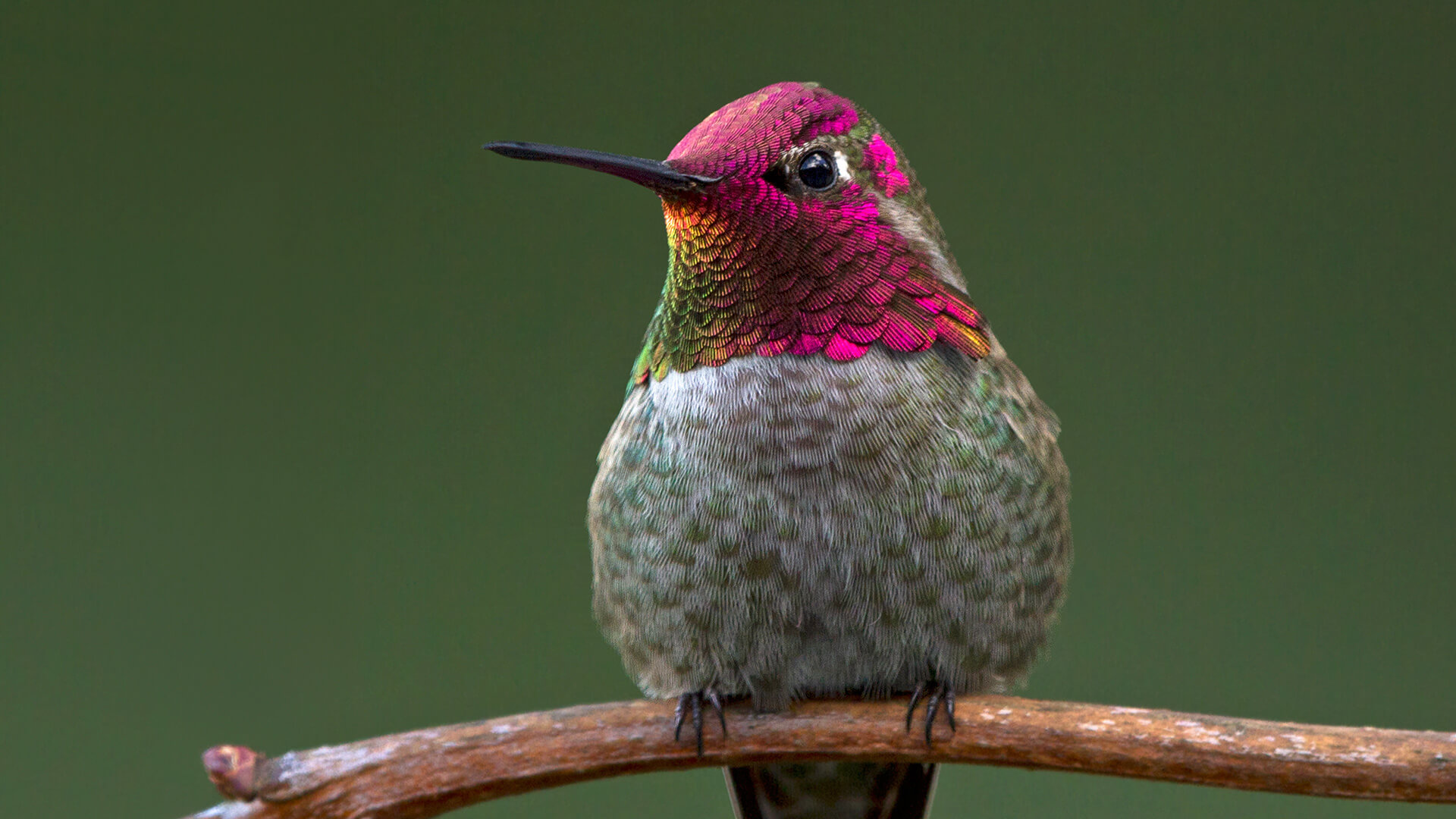 Hummingbird Amp The Keyword What You Need To Know To