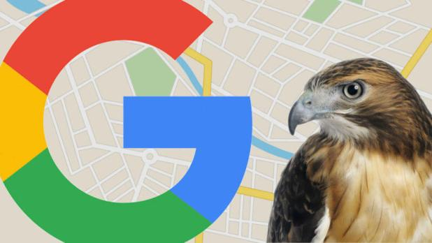 google local hawk update ss 1920 800x450 - August 22, 2017: The day the 'Hawk' Google local algorithm update swooped in