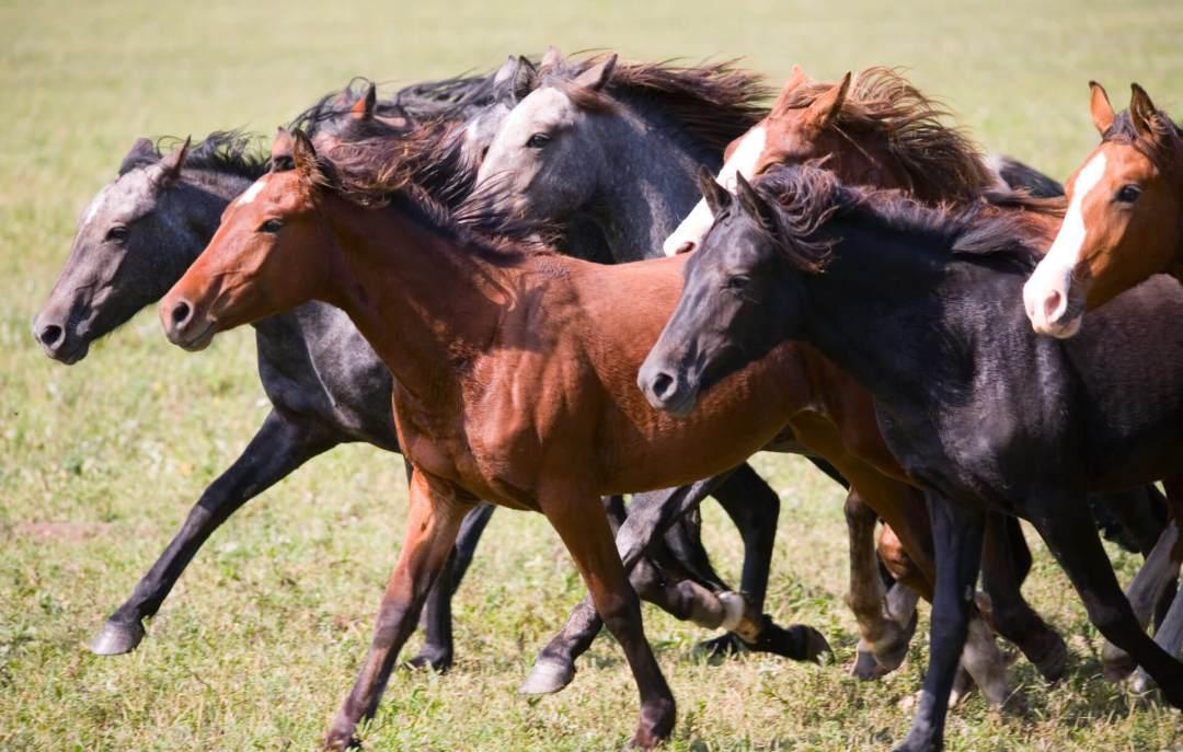 stempede-wild-horsesshutterstock_36968734 A kickback stampede: Why Google's EU comparison shopping program may carry risk