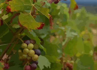 """Lord's vineyard, which """"is the only parable found in Isaiah's writings.""""1Personally, I've spent plenty of time with the parables of the olive garden"""