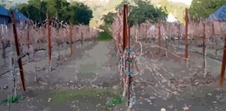 Barren Vineyard explained in Isaiah Chapter 8