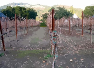 Barren Vineyard explained in Isaiah Chapter 8