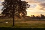 Wimbledon common in Golden Hour (3)