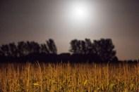 Barming under full moon