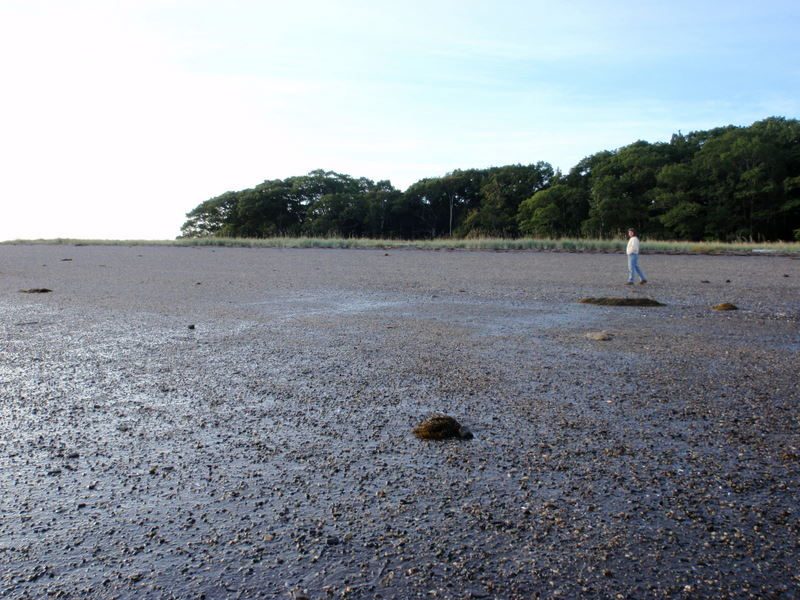 low tide on the pebble beach