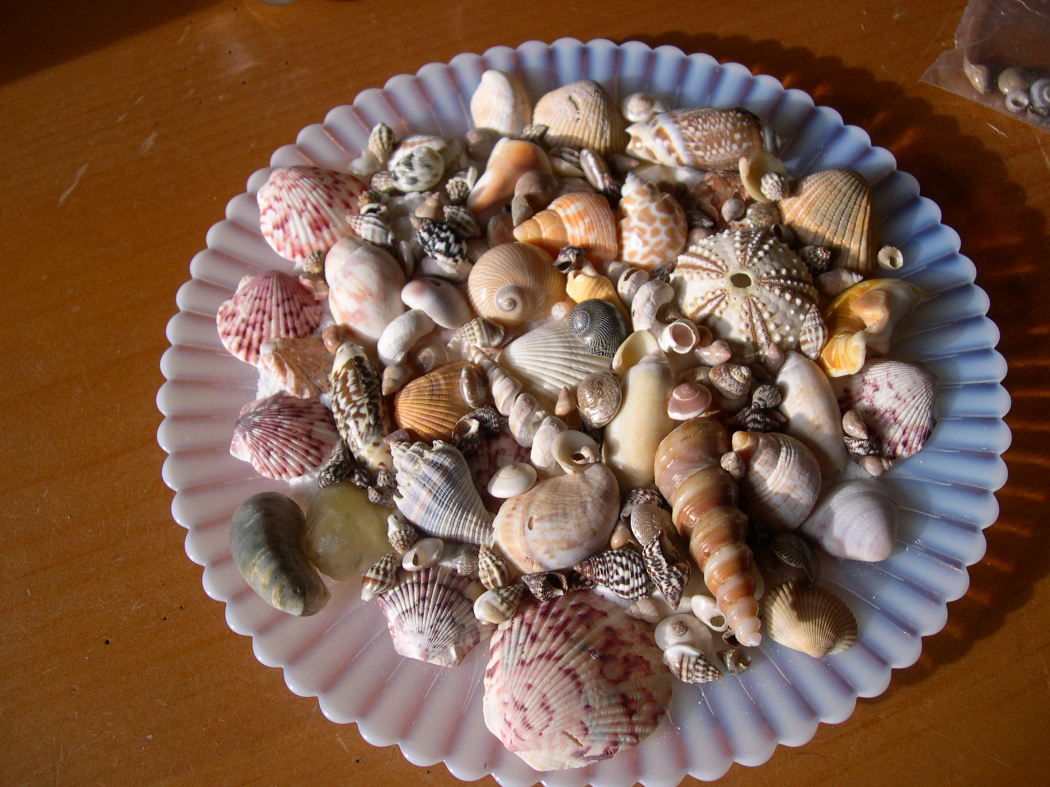 seashell collection on glass plate