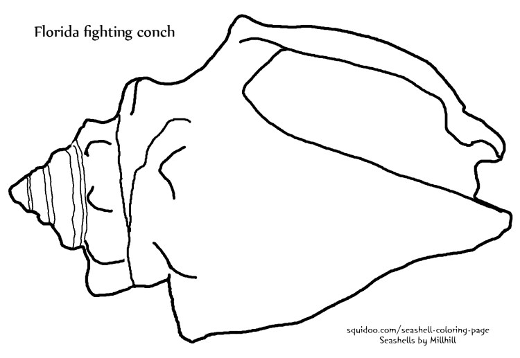 Florida fighting conch coloring page
