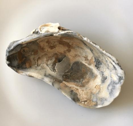 inside an oyster shell