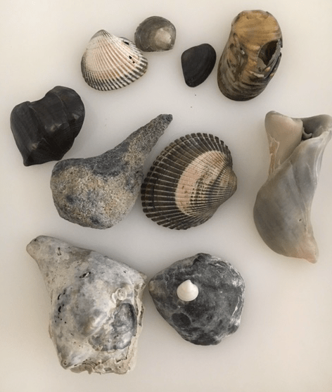 a group of seashells that have turned black