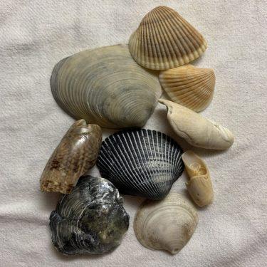 seashells black olives
