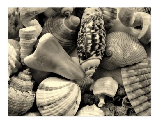 black and white seashells postcard