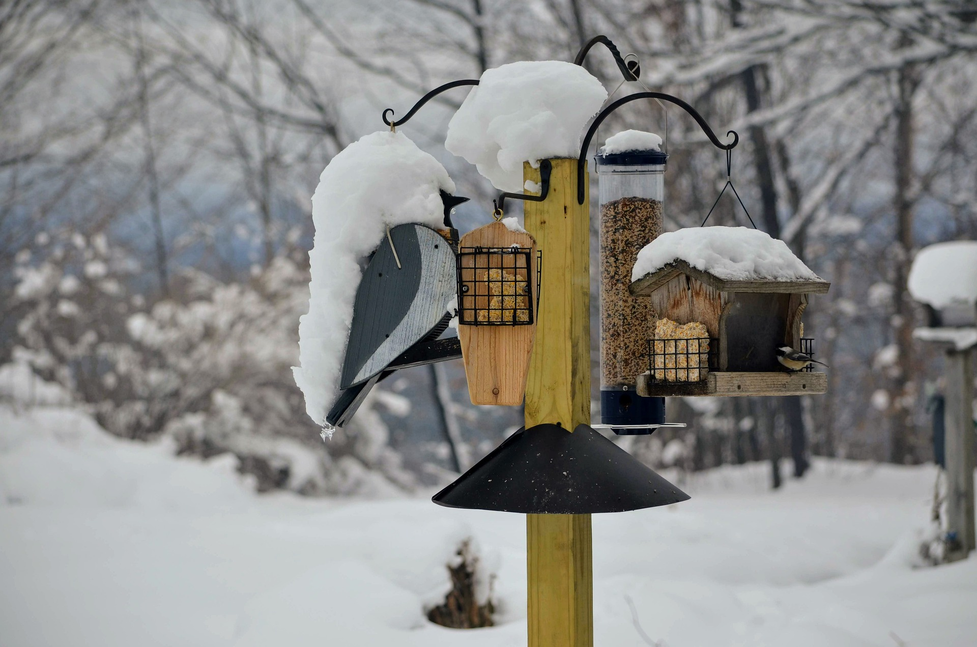 backyard bird feeders in winter snow